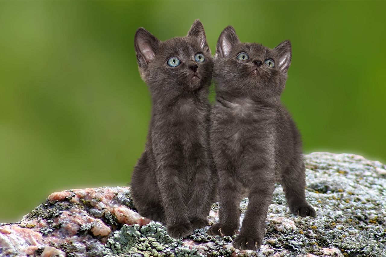 Image Kittens cat 2 Glance animal kitty cat Cats Two Staring Animals