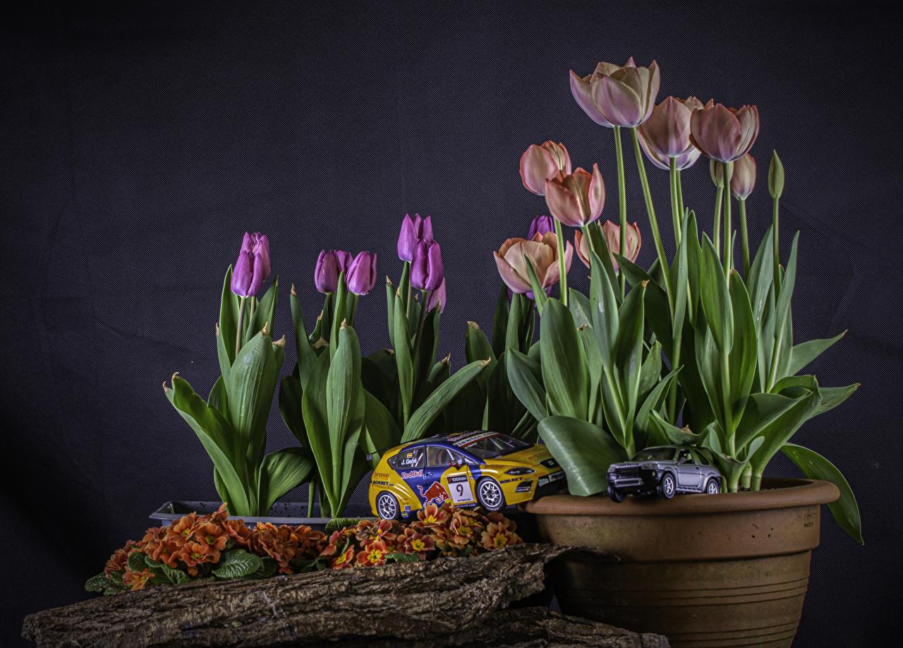 Images Tulips flower pot Flowers Primula Toys tulip plant pot Flowerpot flower toy