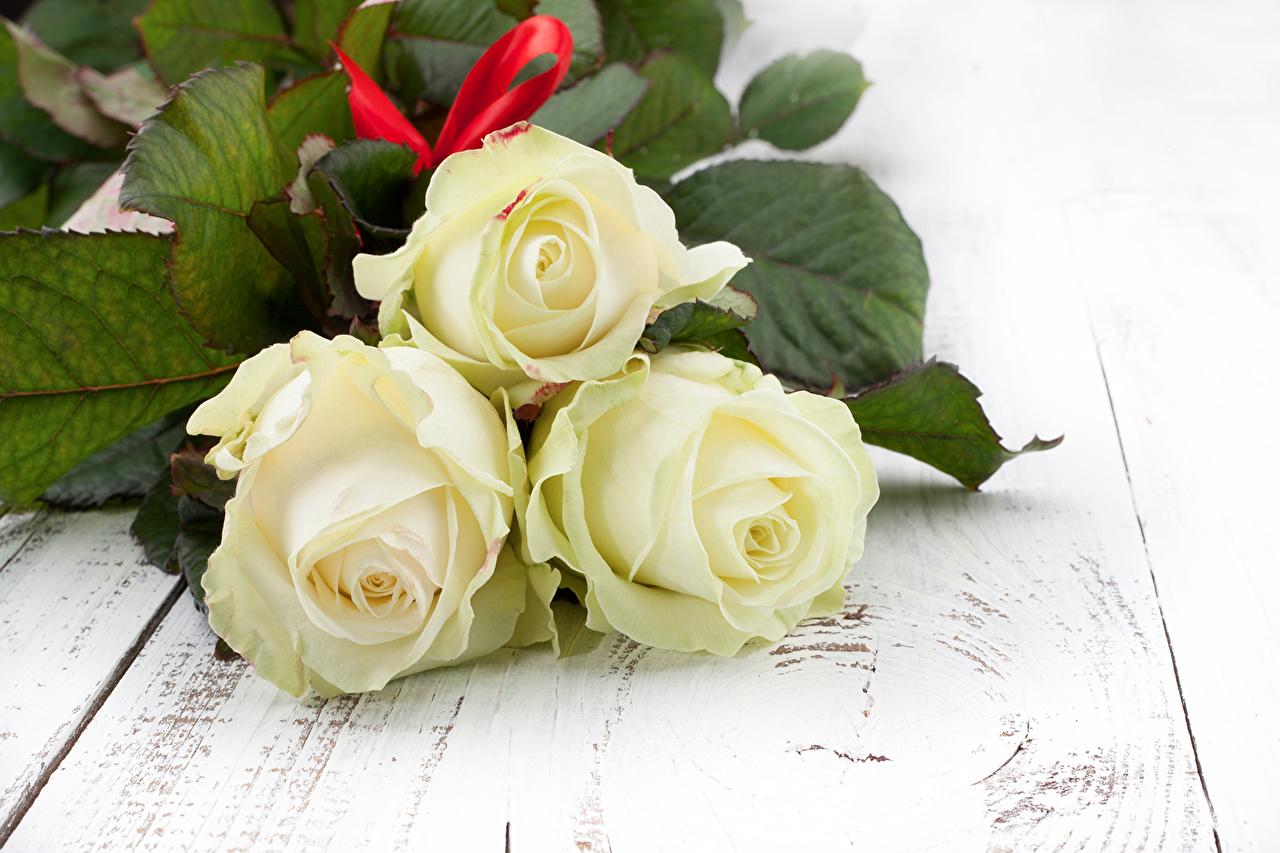 Image rose White flower Three 3 Roses Flowers