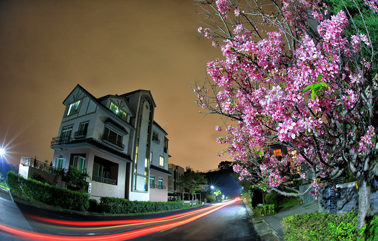 Wallpaper Taiwan Roads Street Night Houses Cities Flowering trees night time Building