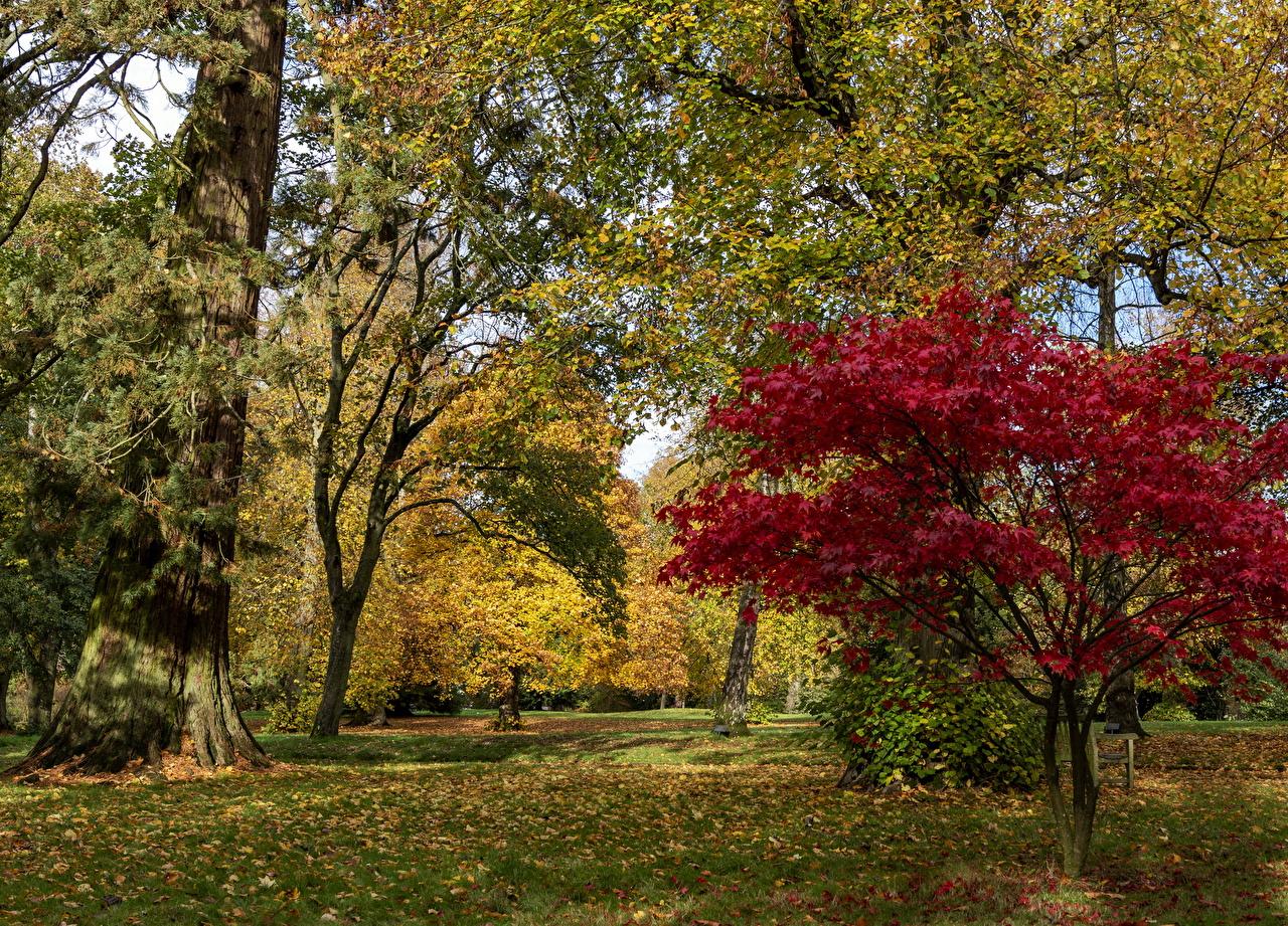 Bilder Blatt Vereinigtes Königreich Waddesdon Manor park Natur Herbst Park Bäume Blattwerk Parks