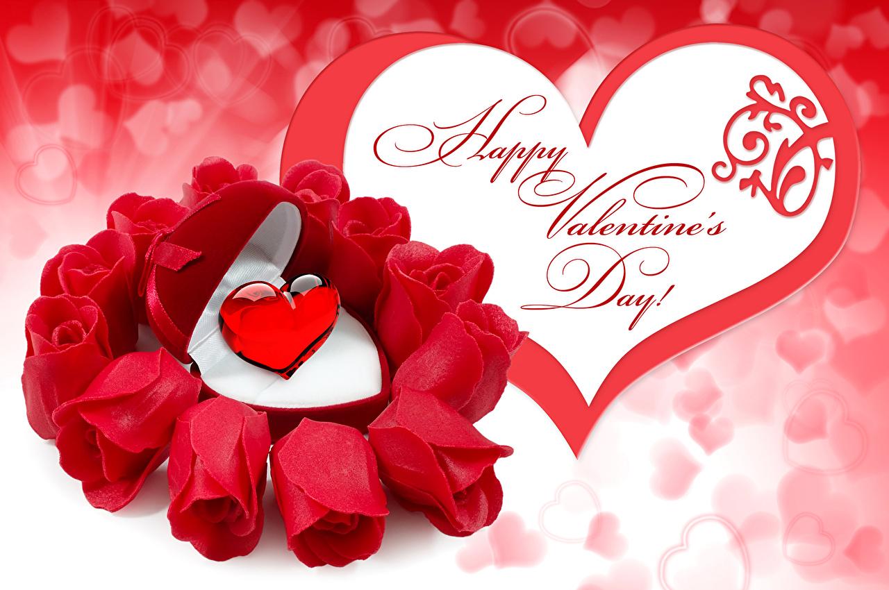 Sfondi Festa di san Valentino Cuore Rose Bordeaux colore fiore Giorno festivo rosa bordò rosso scuro Fiori
