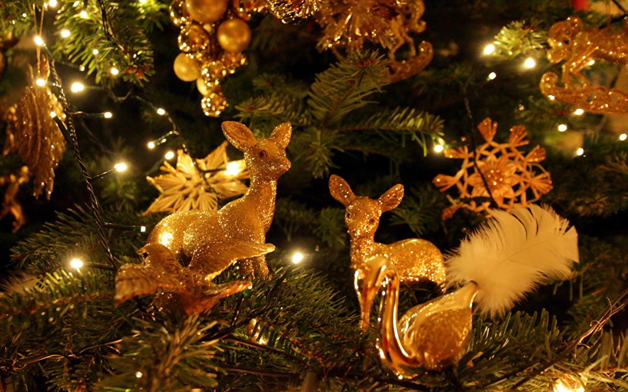Foto Hirsche Neujahr Christbaum Lichterkette Tiere Großansicht Tannenbaum Weihnachtsbaum hautnah ein Tier Nahaufnahme