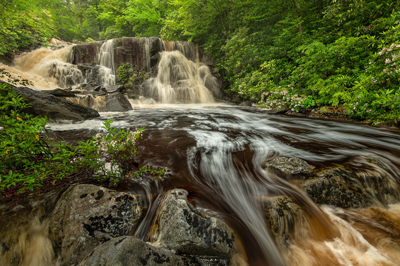 EUA Parque Queda de água Pedras Blackwater Falls State Park Virginia Rocha parques, Estados Unidos, pedra, cachoeira, cascata, penhasco Naturaleza