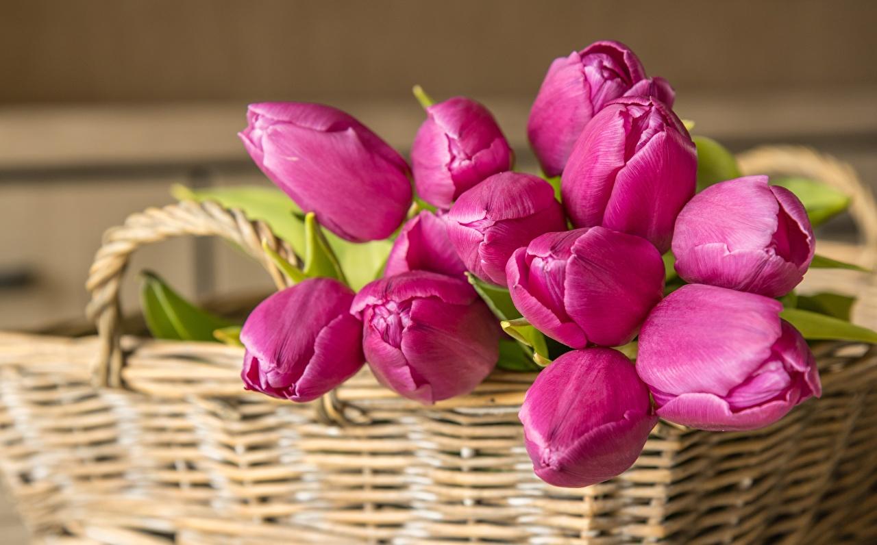 Bilder Sträuße Tulpen Rosa Farbe Blüte Weidenkorb Blumensträuße Blumen