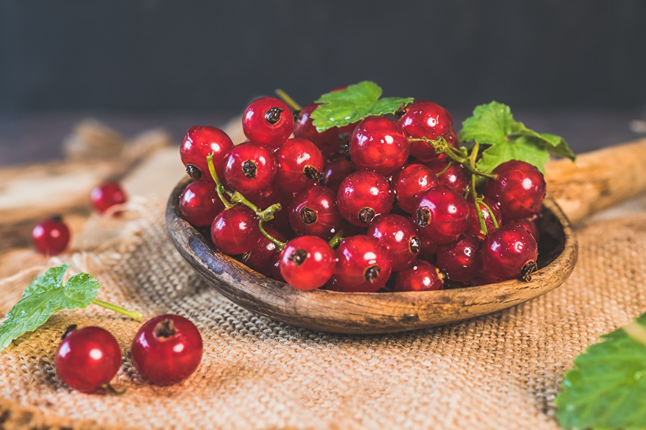 Pictures Leaf Red Bowl Currant Food Berry Many Foliage