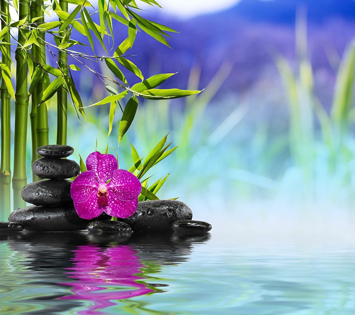 Fotos Spa Natur Bambus Orchideen Blute Wasser Steine