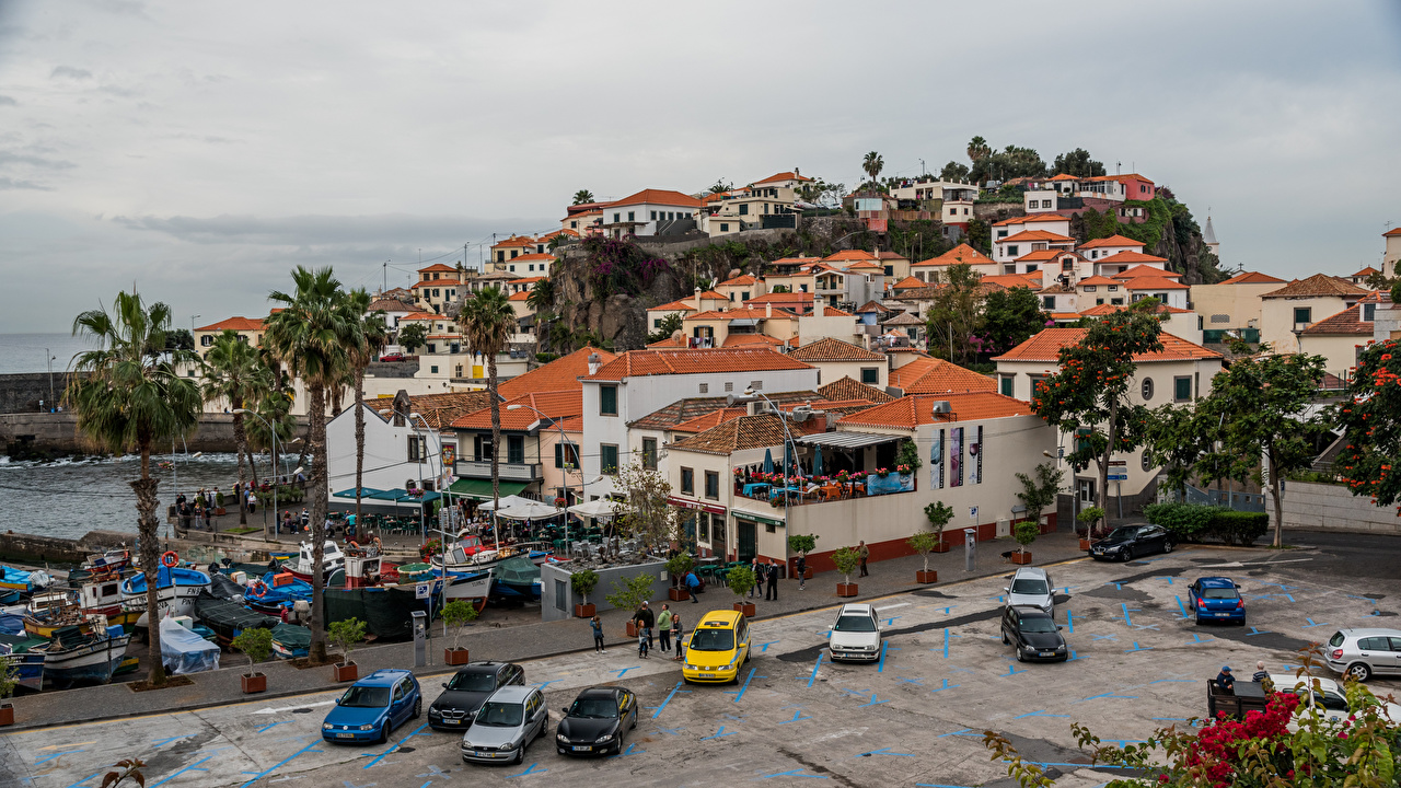 Images Portugal Camara do Lobos, Madeira Palms Coast Cities Building palm trees Houses