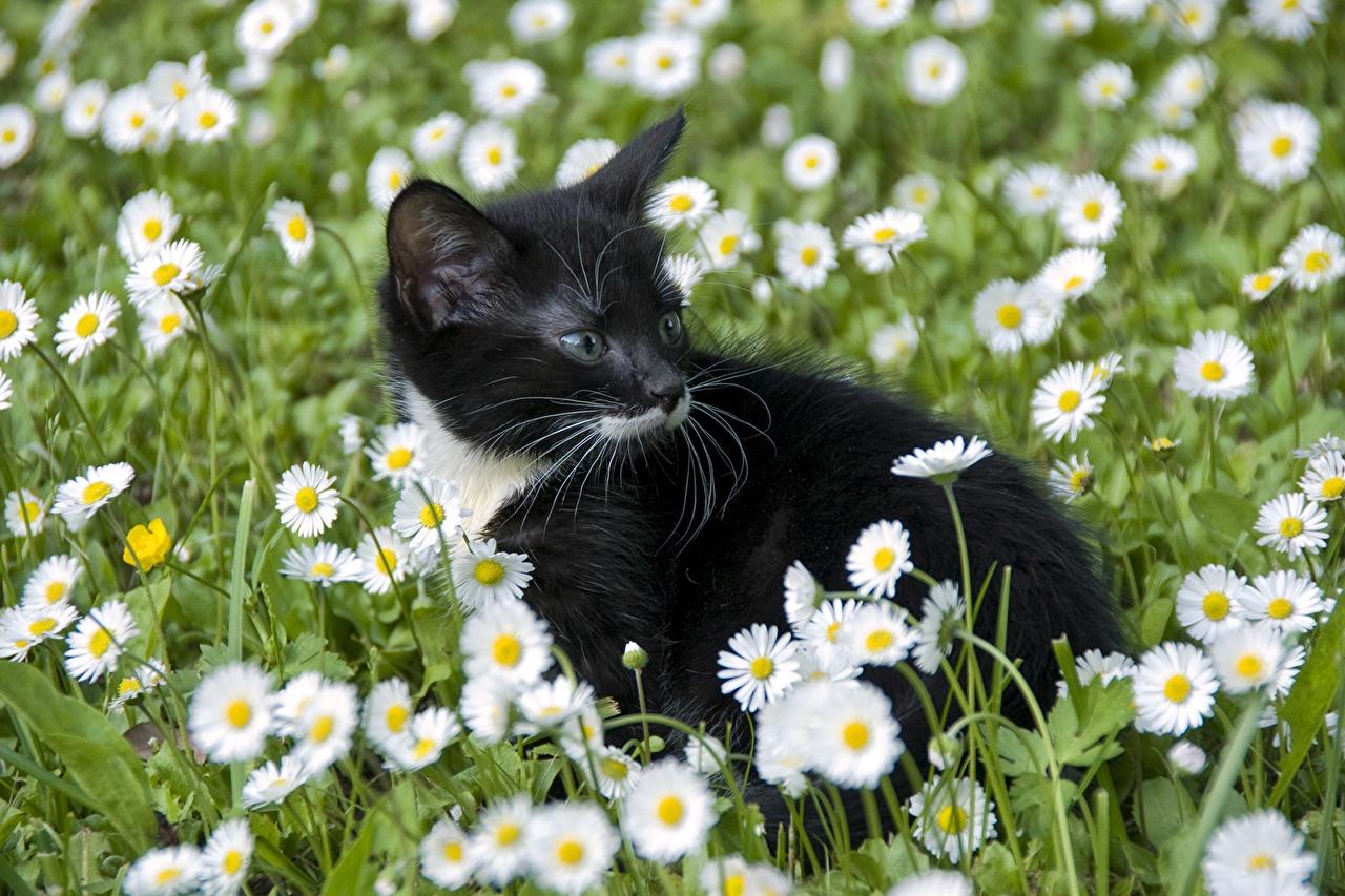 Обои цветы, Кошка. Кошки foto 16