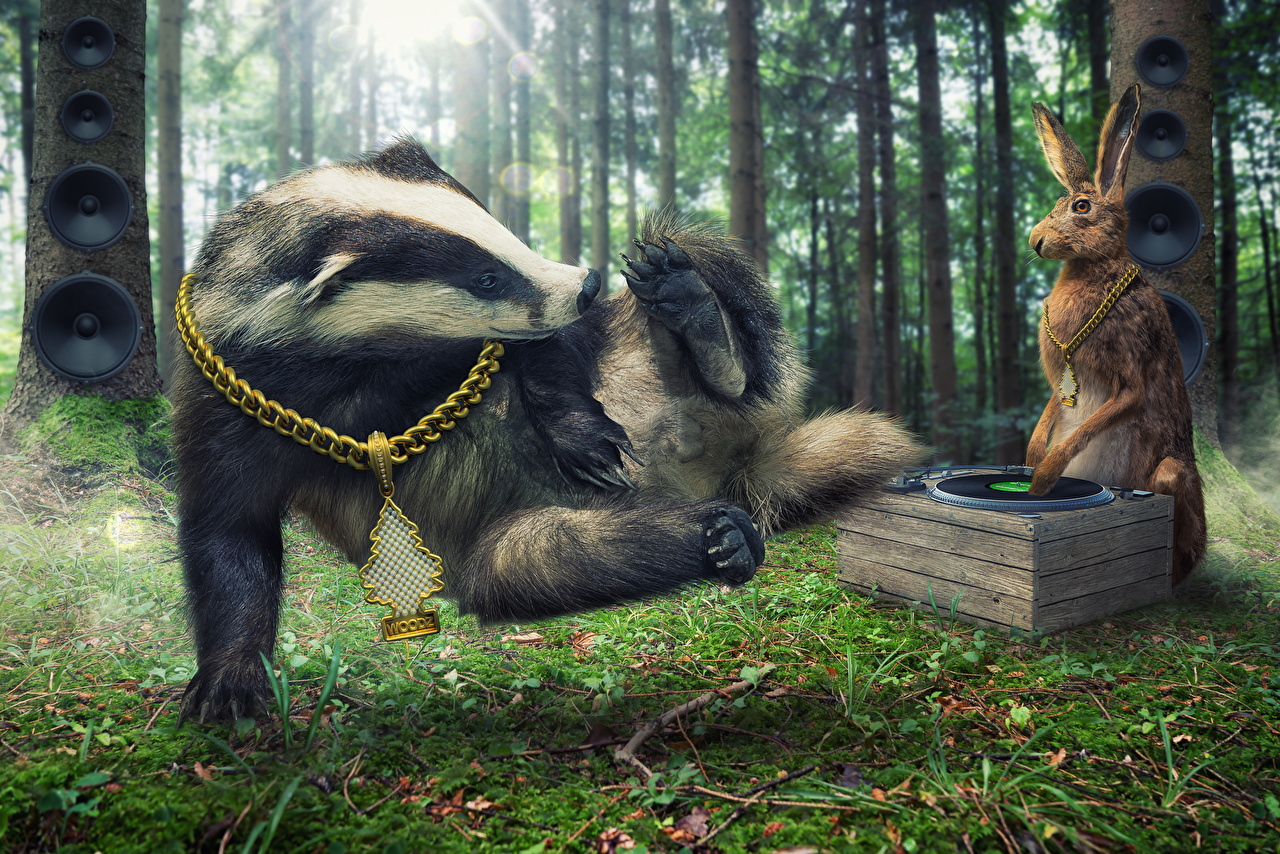 Image funny Hares DJ European badger breakdance Chain Forests animal Jewelry Humor forest Animals