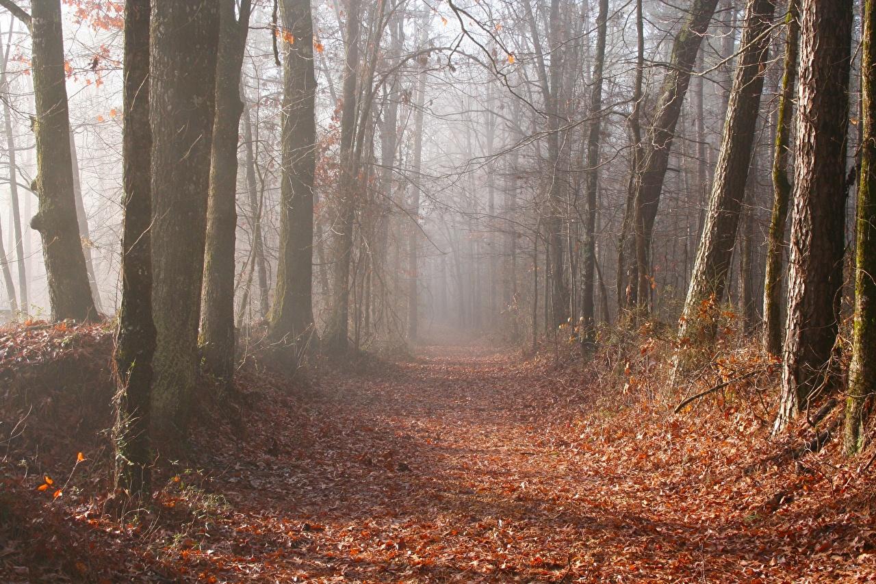 Fotos von Blatt Nebel Weg Natur Herbst Wälder Bäume Blattwerk Wald