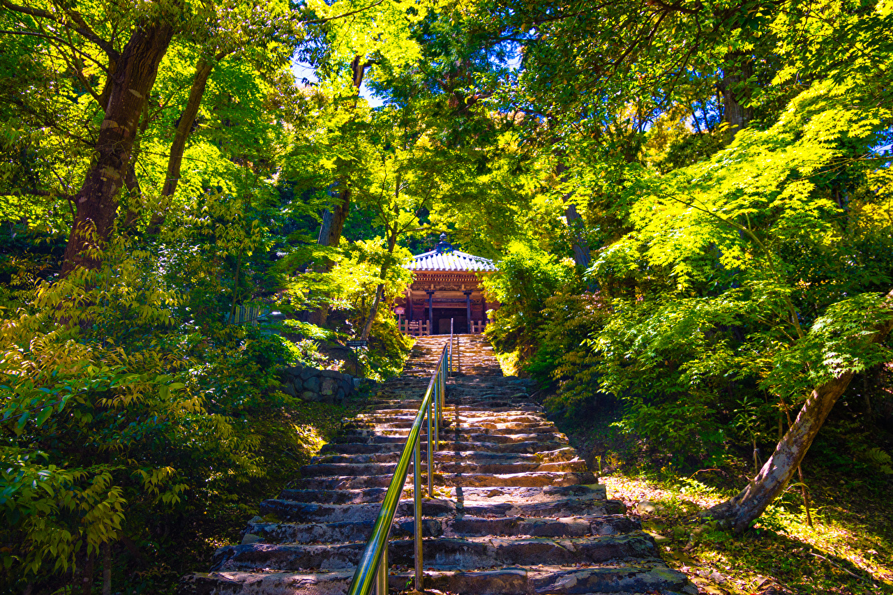 壁紙 京都市 日本 公園 Sagano 階段 低木 木 自然
