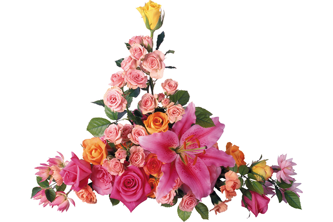 Bakgrunnsbilder til skrivebordet bukett rosa Liljer Blomster Hvit bakgrunn Buketter Roser lilje blomst