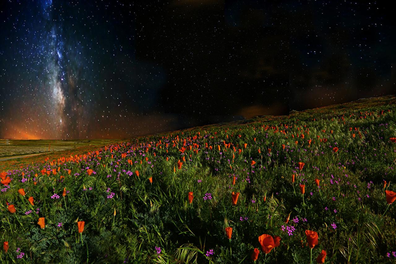 Desktop Hintergrundbilder Stern Natur Acker Himmel Mohnblumen Nacht Mohn Felder