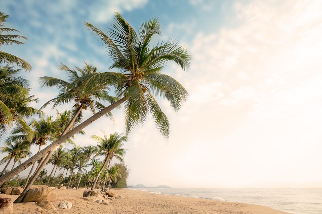 Bilder von Strand Natur Palmen Himmel Bäume Strände Palmengewächse