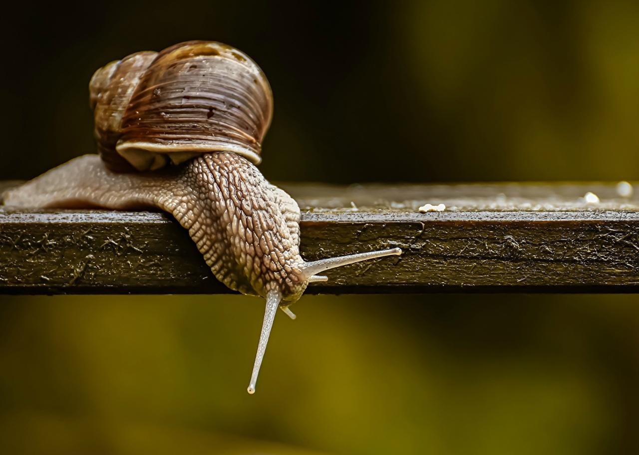 ,蜗牛,特寫,木板,動物,