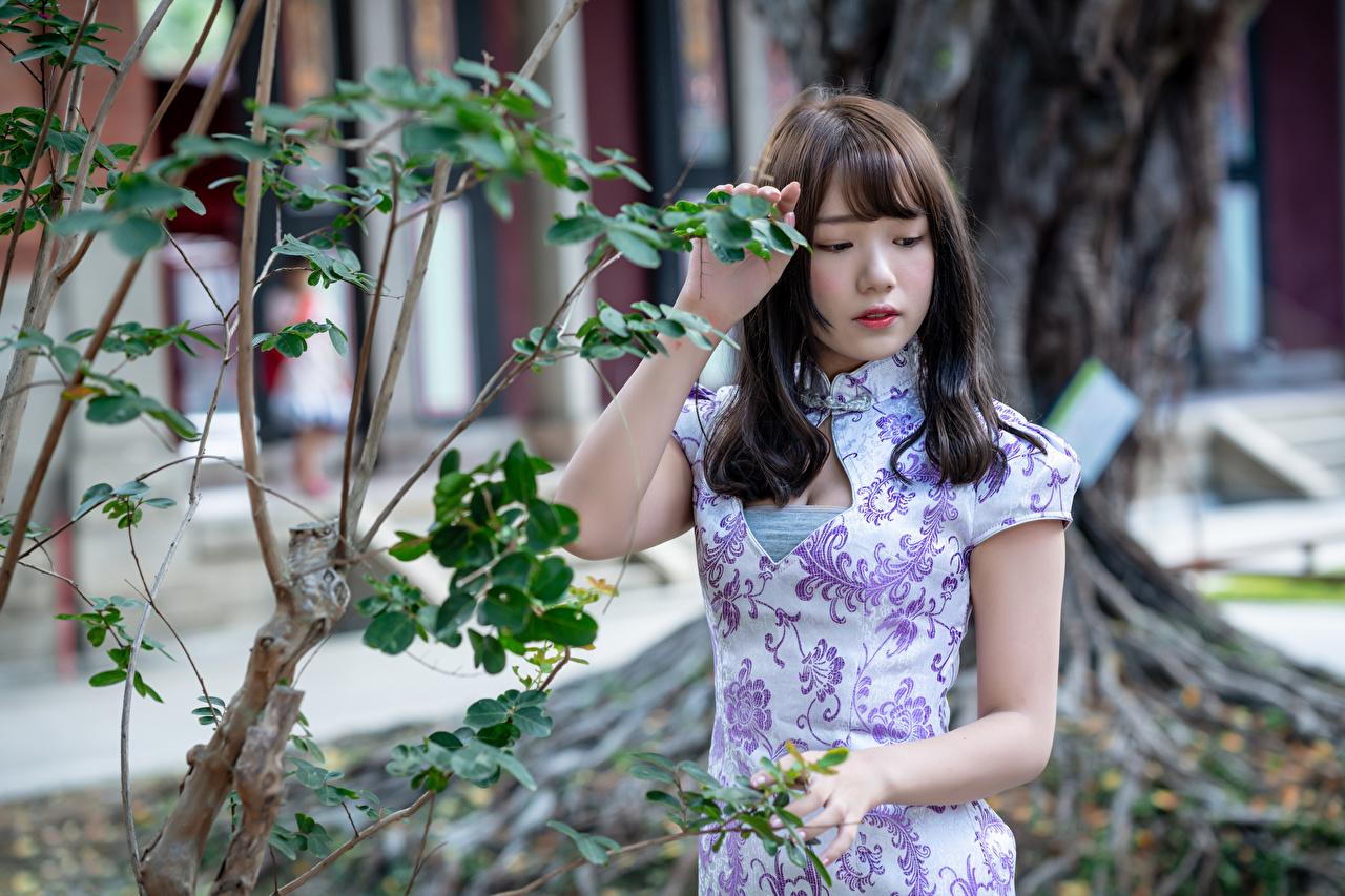 Bilder på skrivbordet ung kvinna asiatisk hand Grenar Klänning Unga kvinnor Asiater Händer
