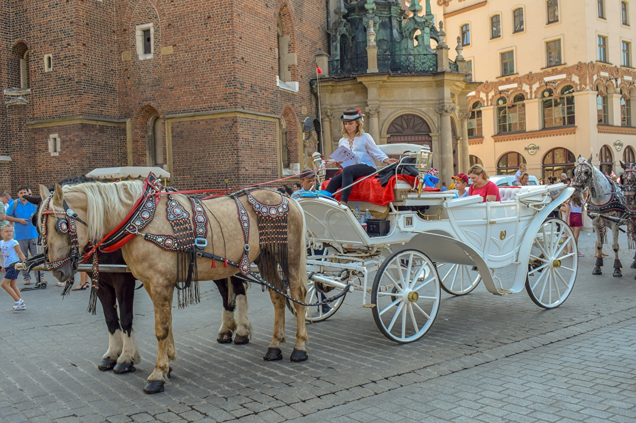 Picture horse Carriage Street sit Animals Horses Sitting animal