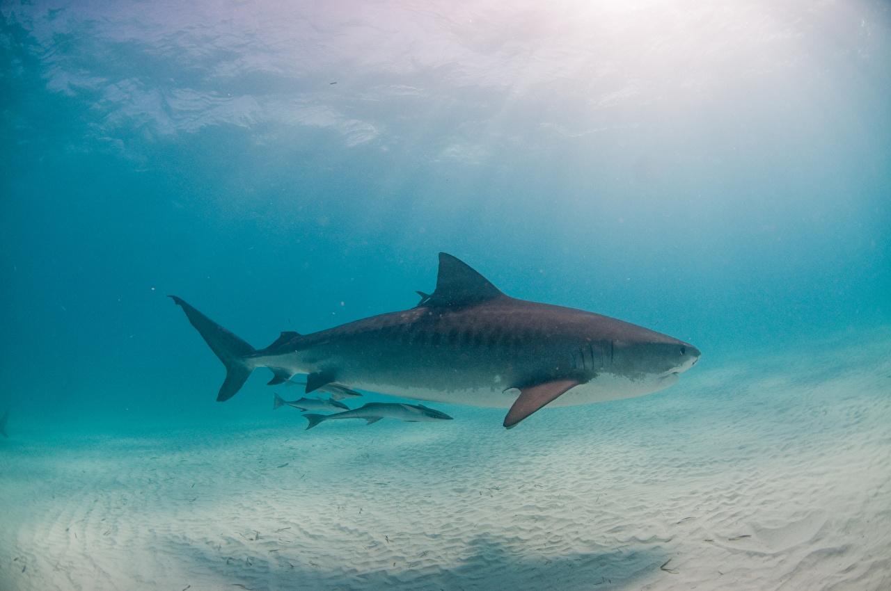 壁紙 サメ アンダーウォーターワールド 動物 ダウンロード 写真