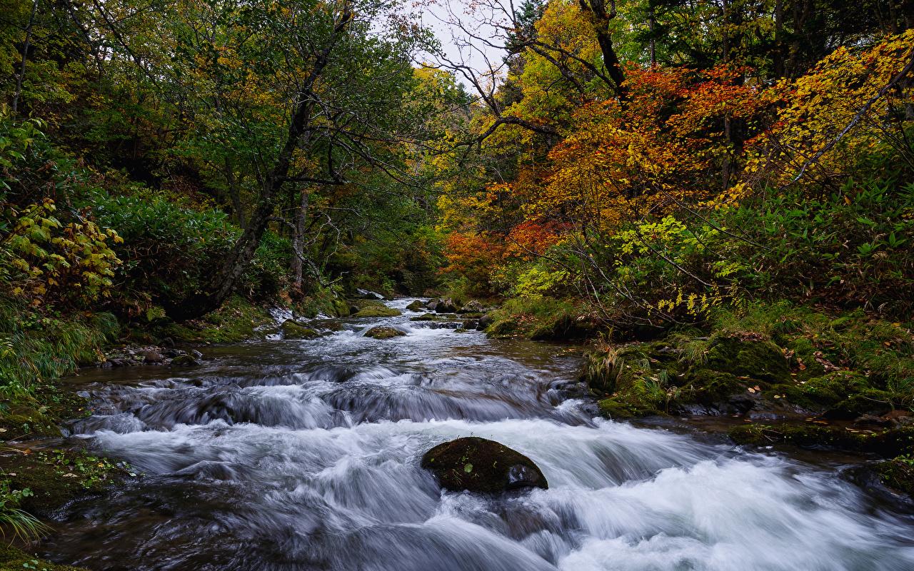 Foto Japan Hokkaido Natur Herbst Wälder Fluss Laubmoose Bäume Wald Flusse