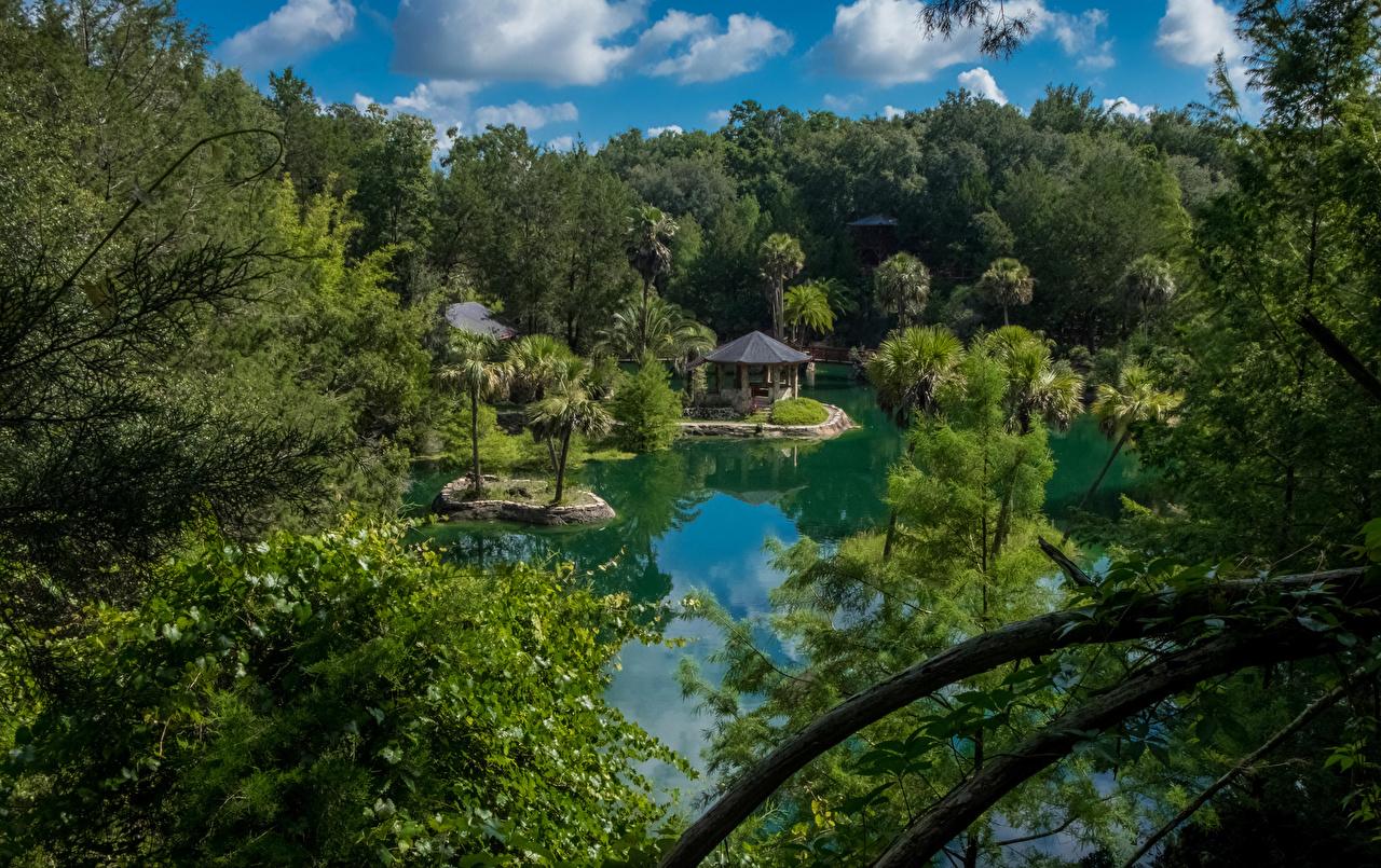 Bilder von Florida USA Cedar Lakes Woods and Gardens Natur See Park Palmen Wälder Vereinigte Staaten Palmengewächse