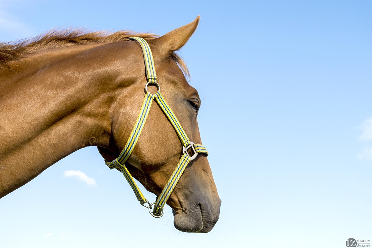 Afbeelding paard Hoofd een dier 1ZOOM Paarden Dieren