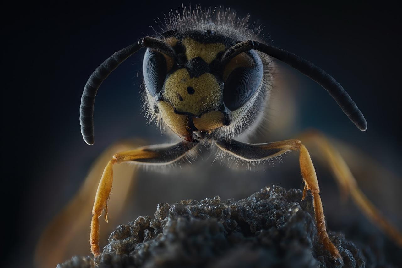 Images Wasp Macro photography animal Closeup Macro Animals