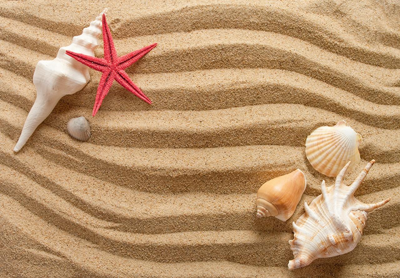 Picture Starfish Sand Shells Closeup sea stars