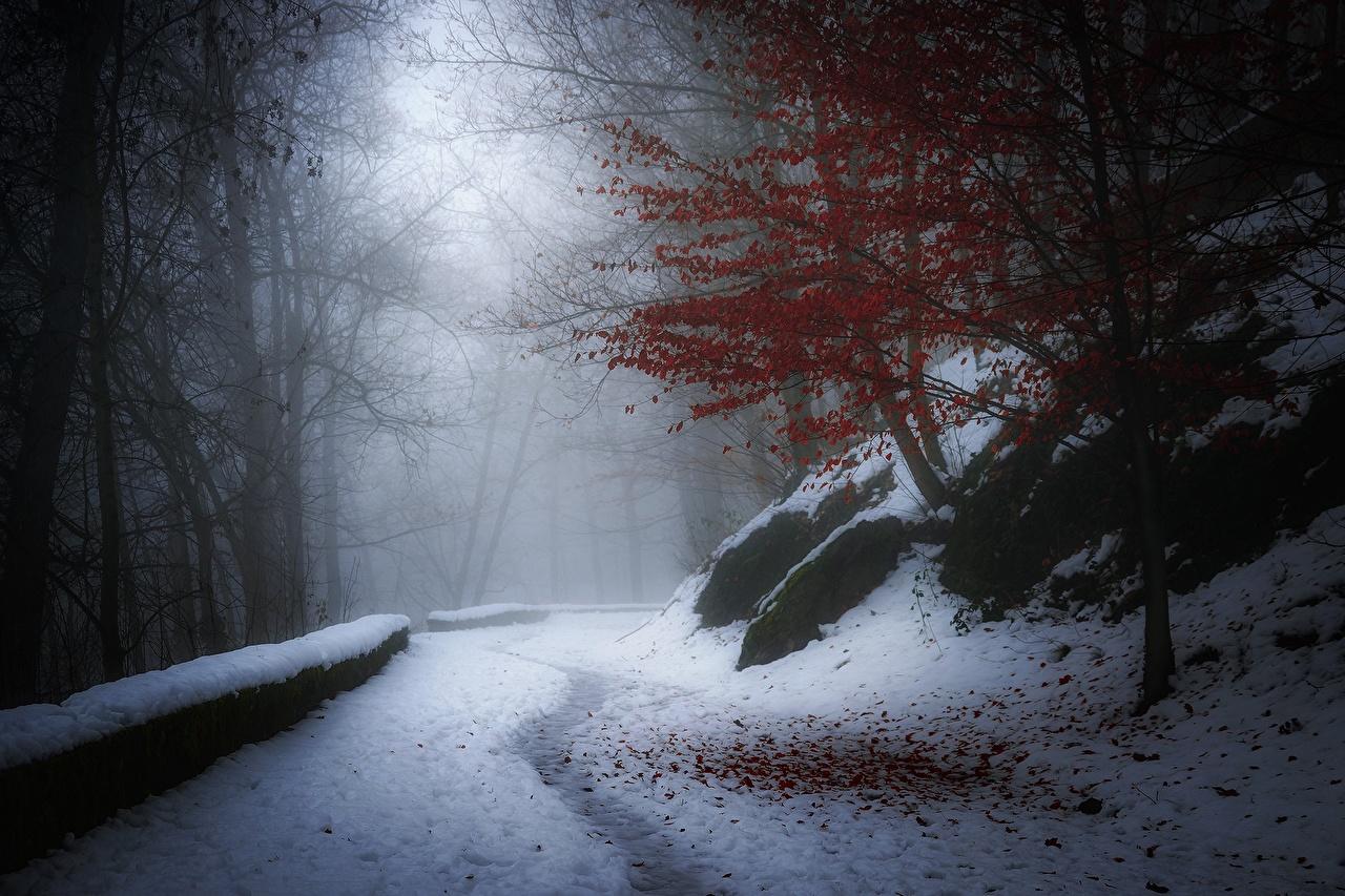 Image Trail Winter Nature Trees Seasons path