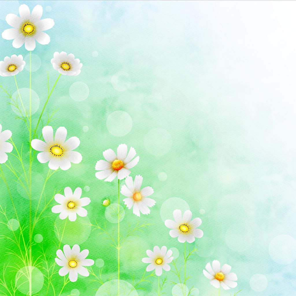 Bilder von Papier Blumen Gänseblümchen Gezeichnet Blüte