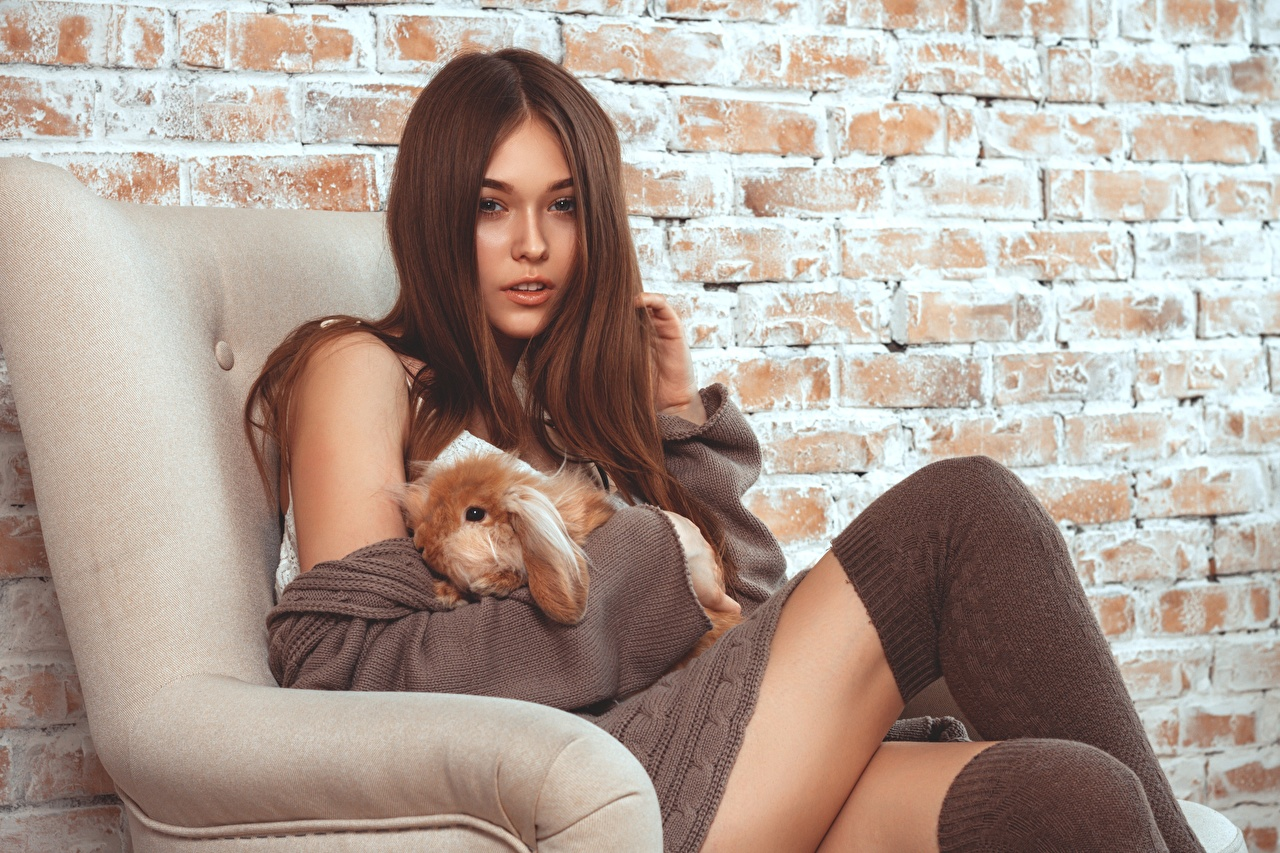 Photo Rabbits Knee highs Brown haired young woman Sweater Sitting Armchair Staring rabbit Girls female sit Wing chair Glance
