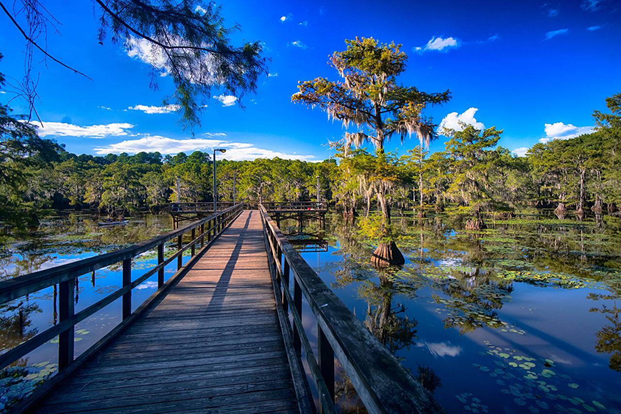 Bilder von Texas USA Caddo Lake Natur Brücken See Zaun Vereinigte Staaten