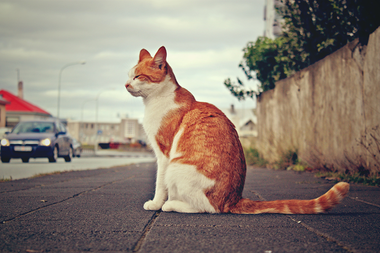 Desktop Wallpapers Cats Sitting Pavement animal cat sit Animals
