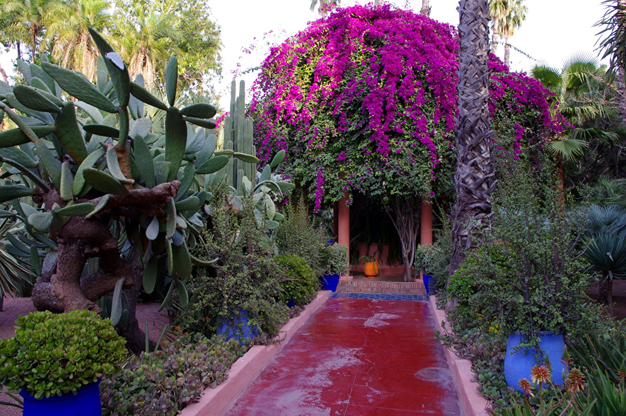 Fotos Von Morocco Marrakech Jardin Majorelle Natur Garten