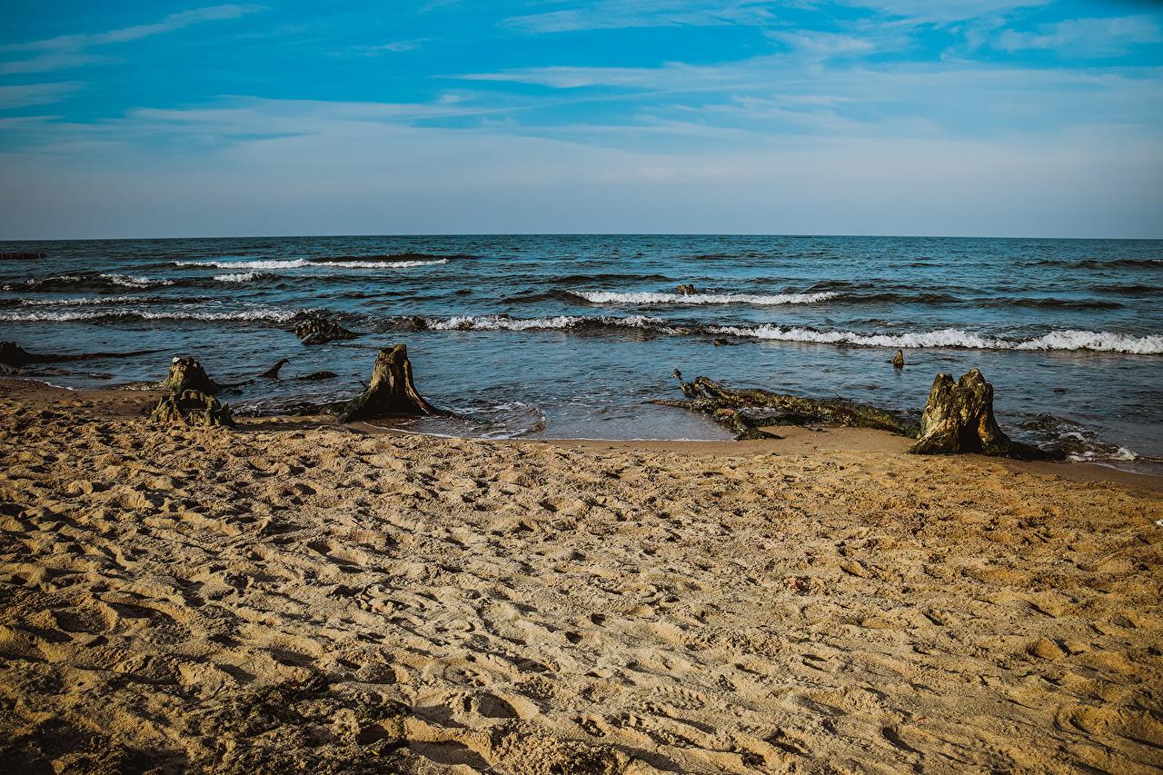 Photo Russia Baltic Sea Zelenogradsk beaches Nature Sand Tree stump Coast Horizon 1ZOOM Beach