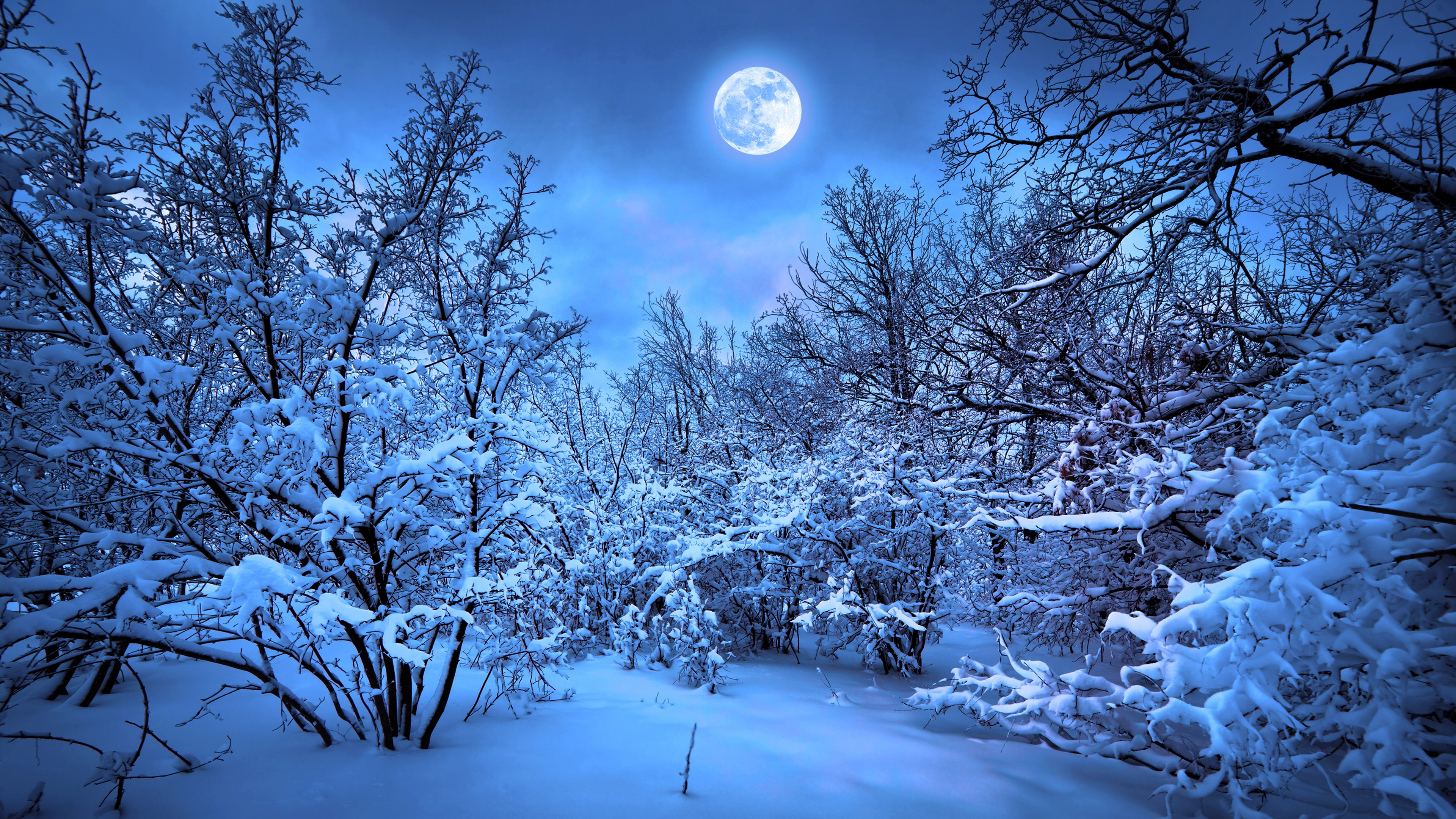 Images Winter Nature Moon Snow forest Evening Branches 3840x2160 Forests