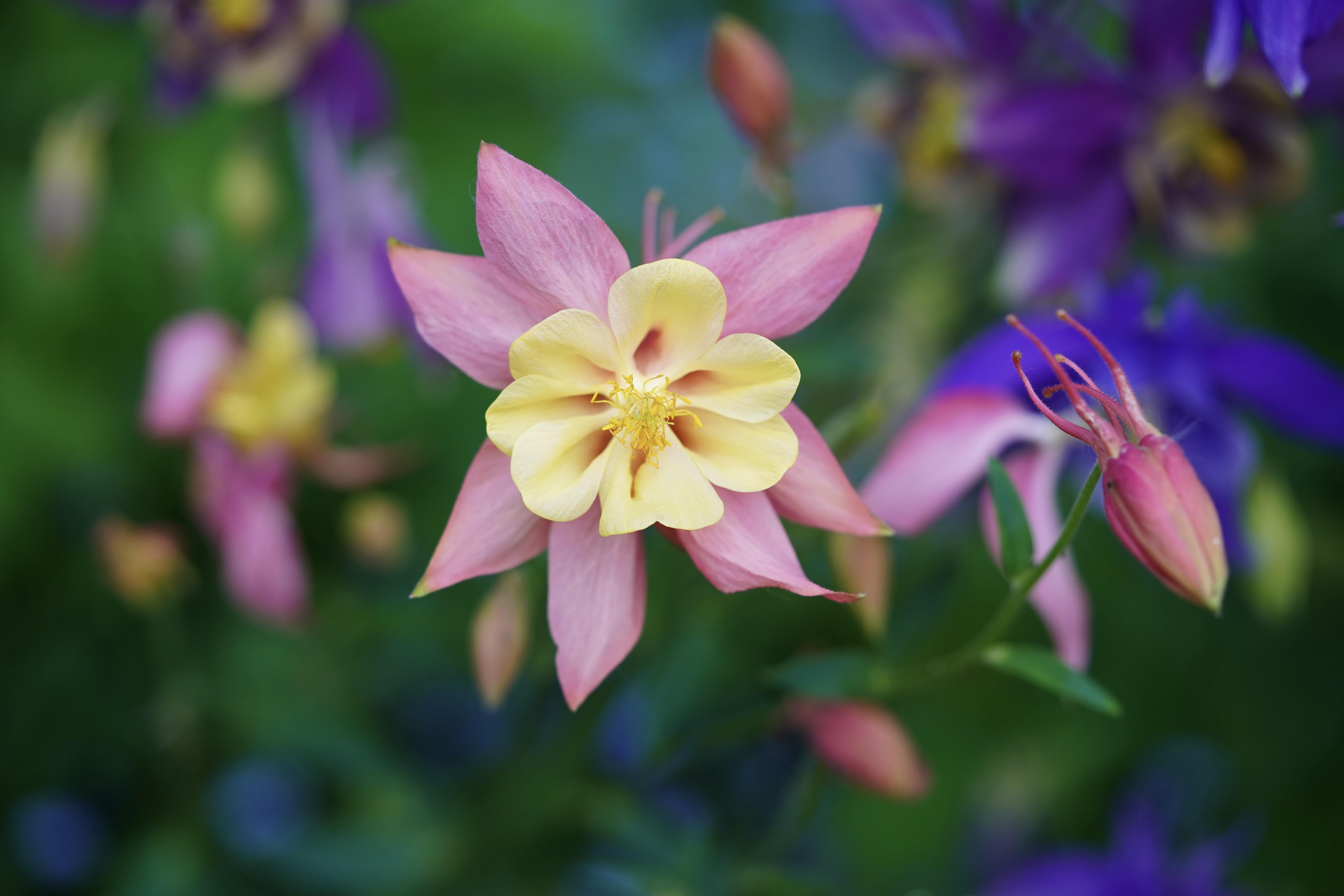 Desktop Wallpapers Bokeh flower Closeup blurred background Flowers