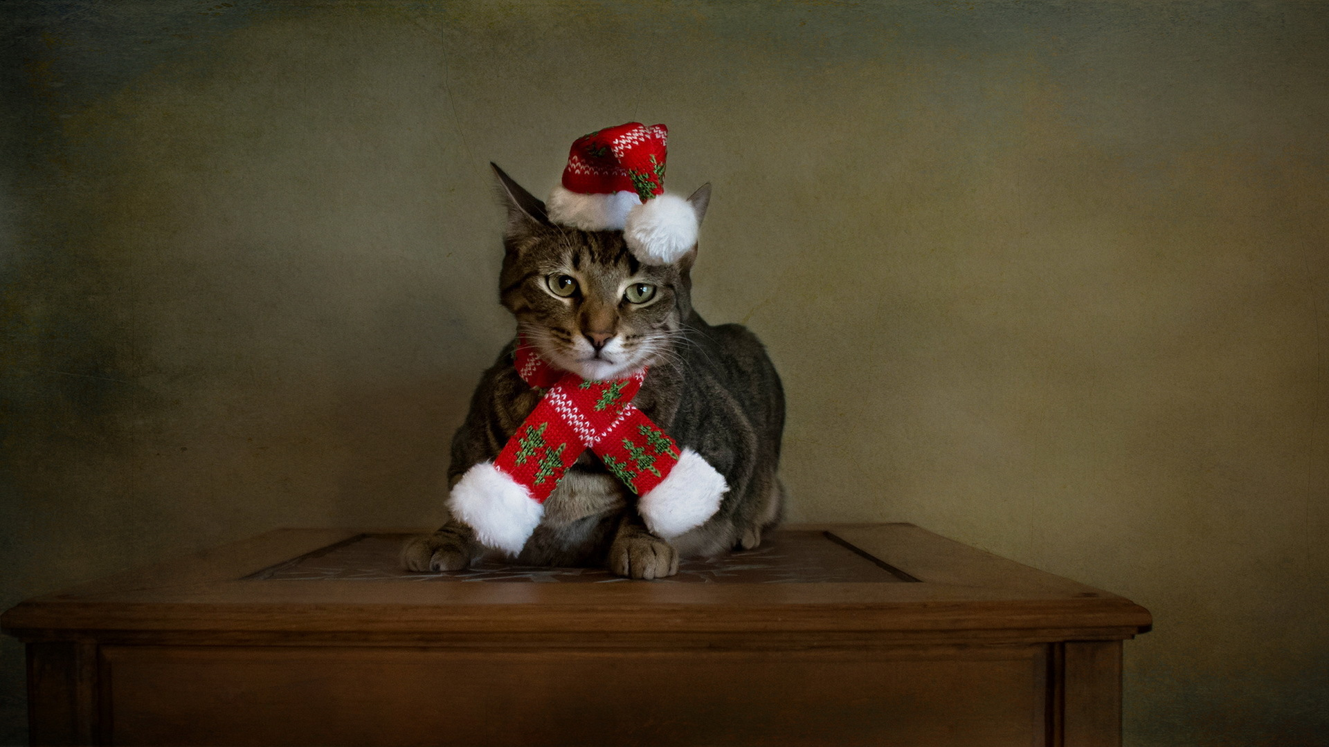 Images Cats New year Hat animal Holidays 1920x1080