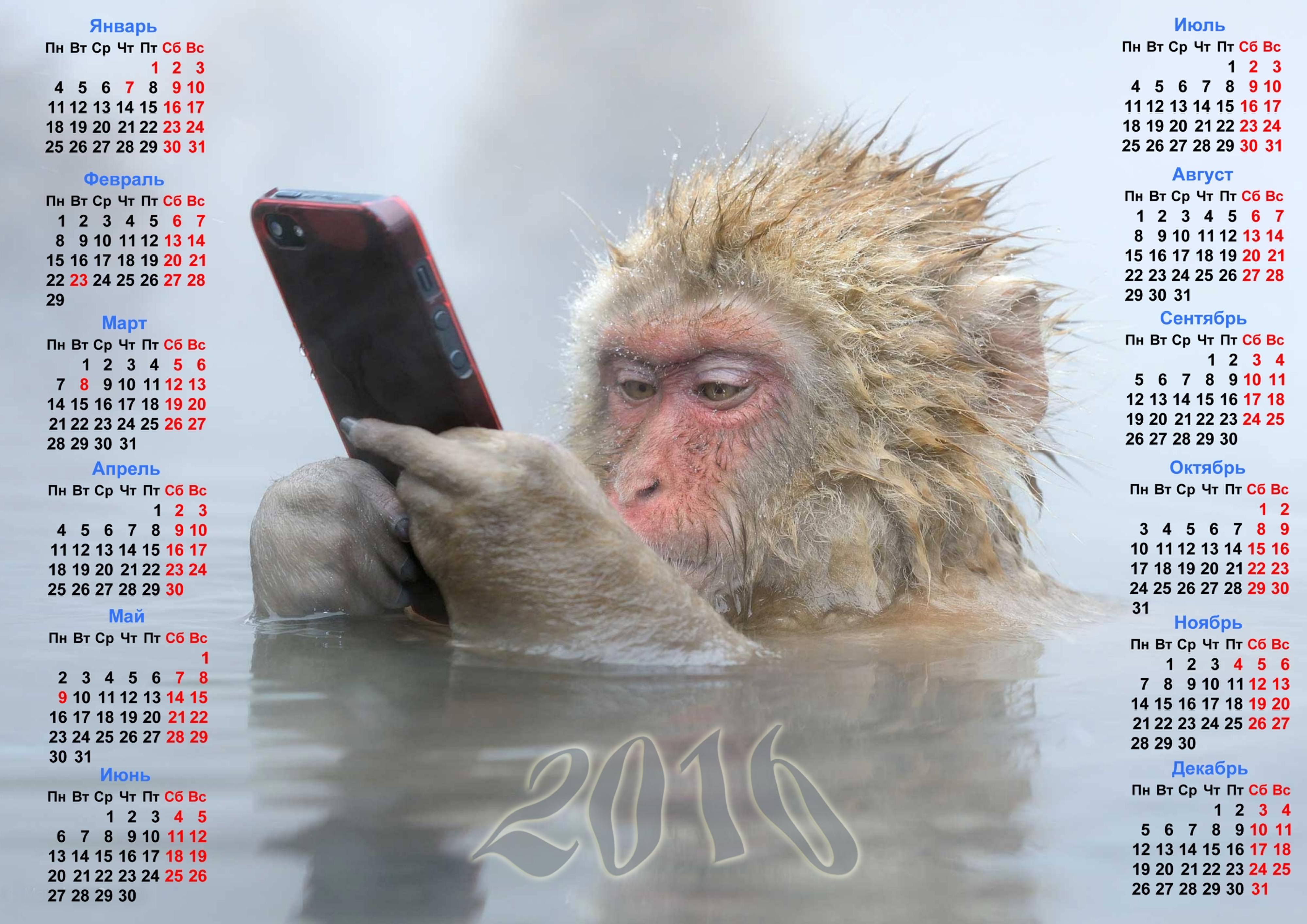 Desktop Wallpapers 2016 Monkey Calendar Animal 4000x2828 Images, Photos, Reviews