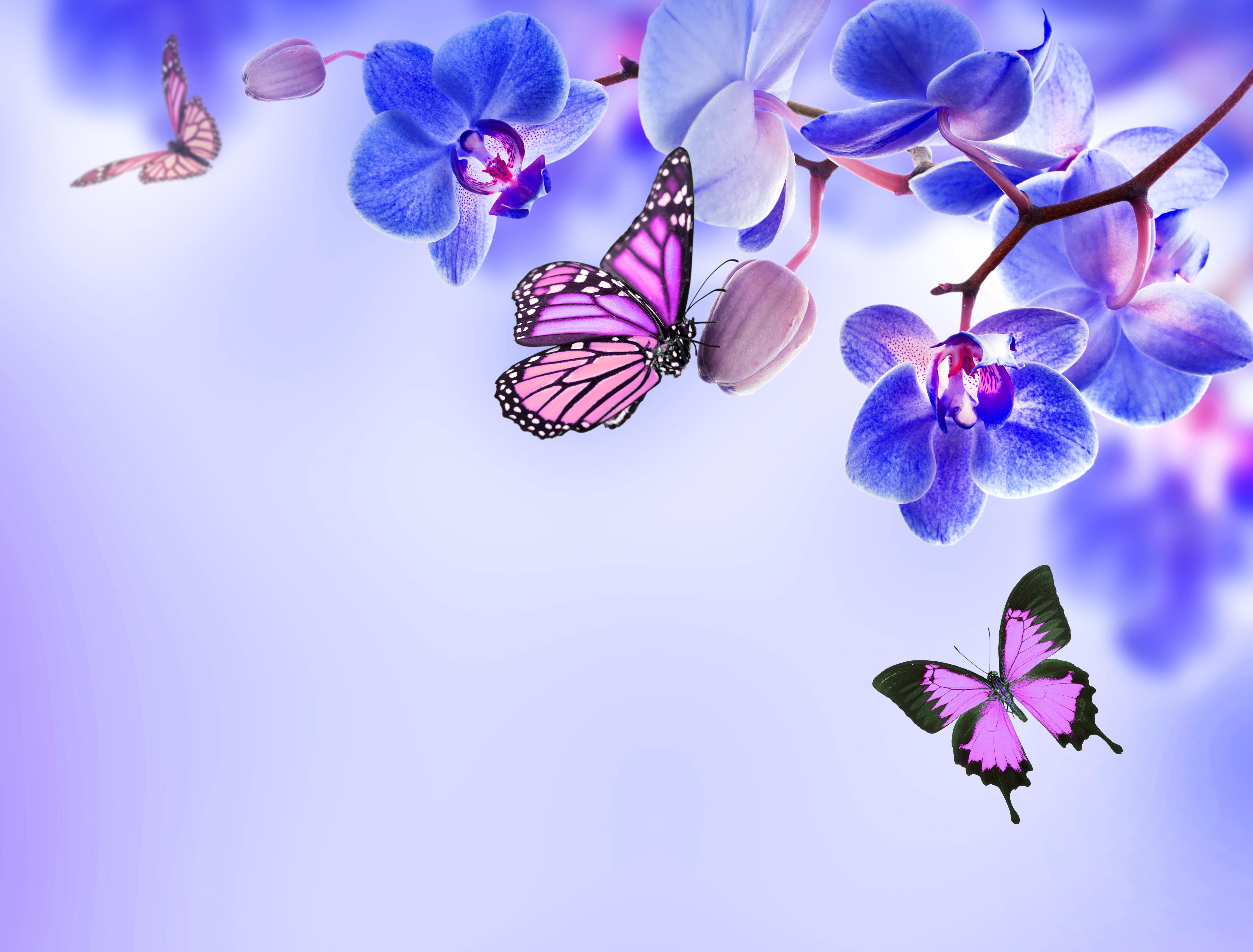 壁紙 5000x3800 蘭花 蝴蝶 君主斑蝶 花卉 下载 照片