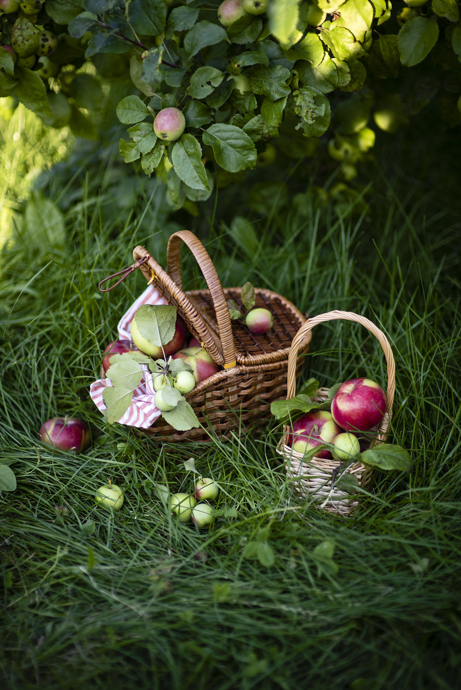 Wallpaper Apples Wicker basket Food Grass  for Mobile phone