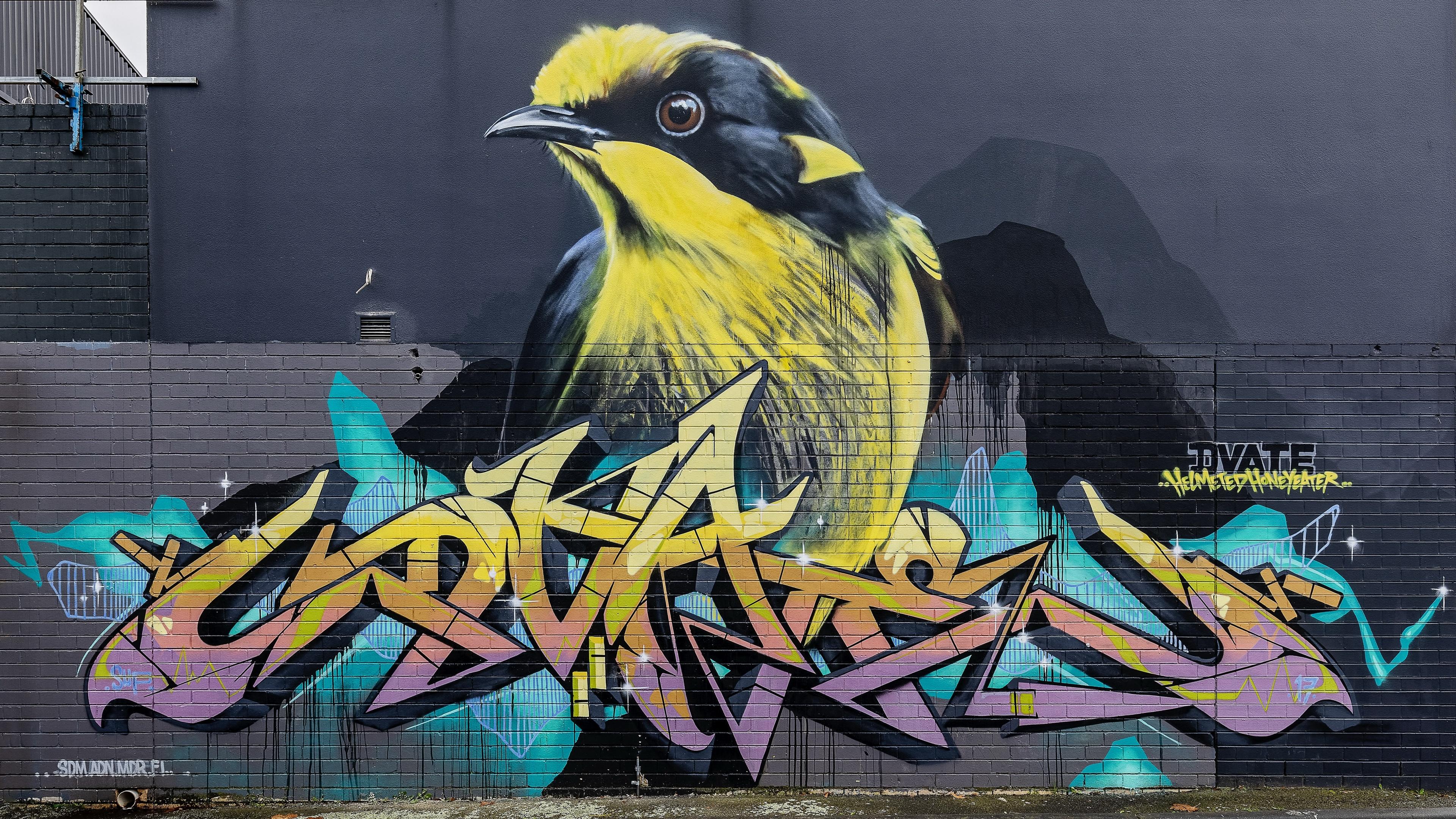 Bilder på skrivbordet fågel Graffiti Vägg 3840x2160 Fåglar väggar