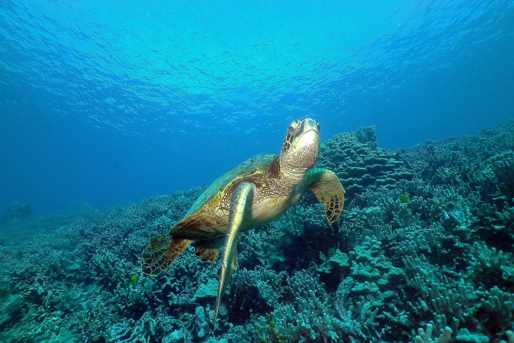 Pictures Skulls Underwater World Animal 2048x1365