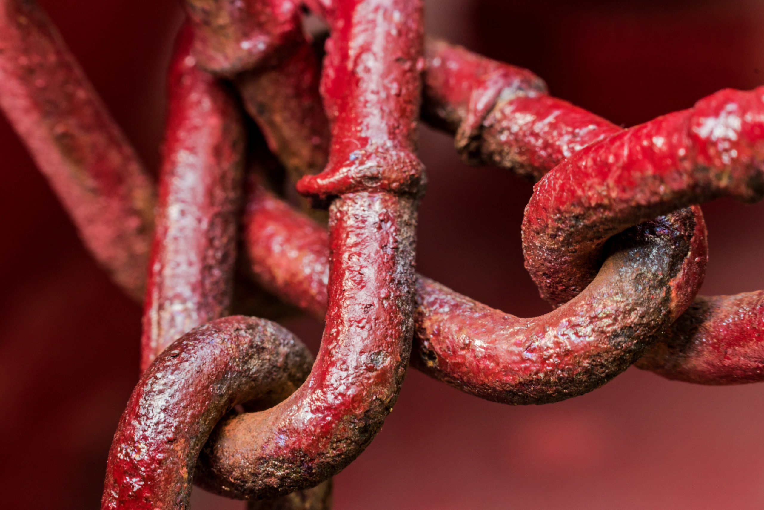 Pictures Red Chain Closeup 2560x1707
