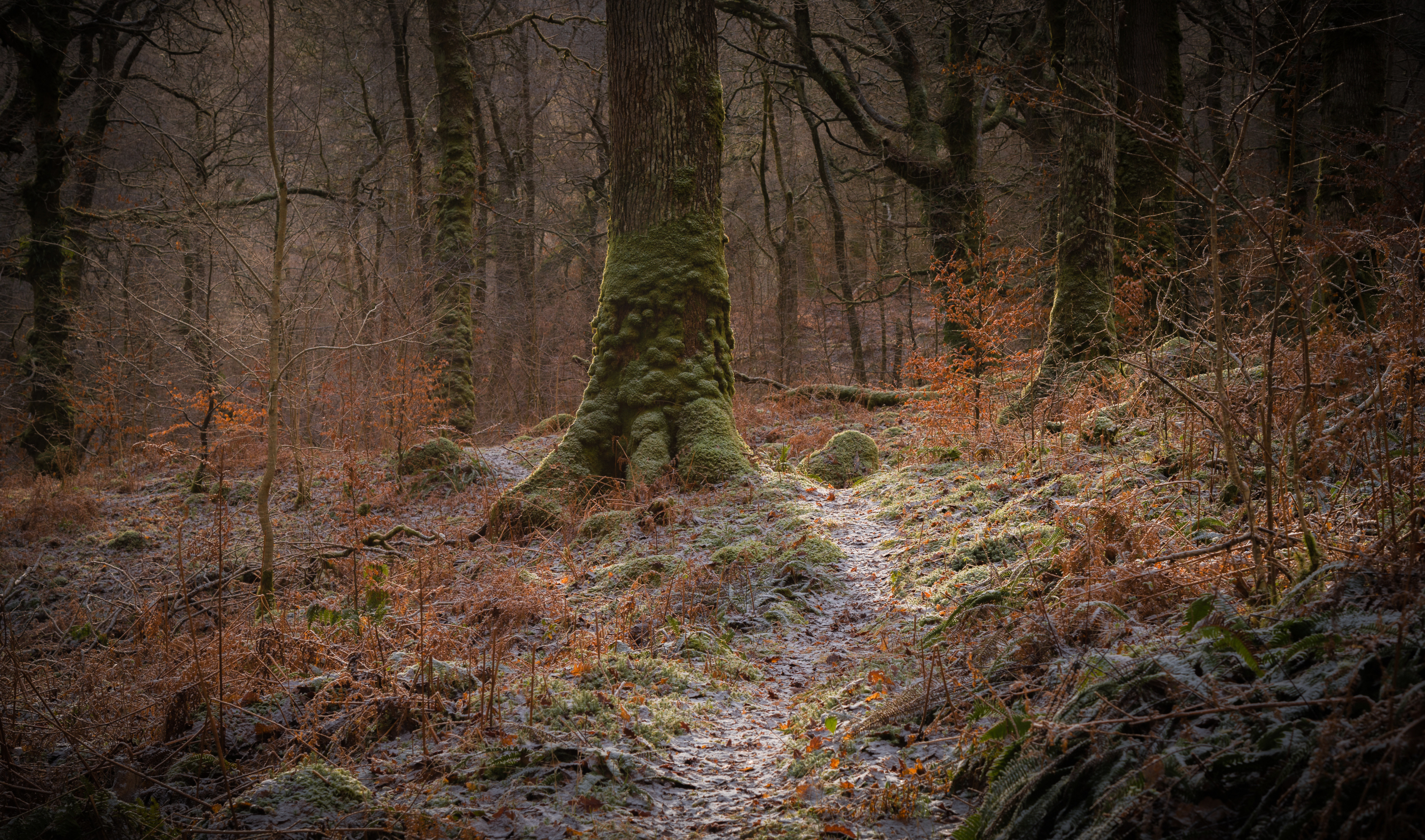 Images Scotland Frost Galloway Nature forest Moss Trees 5120x3019 Forests