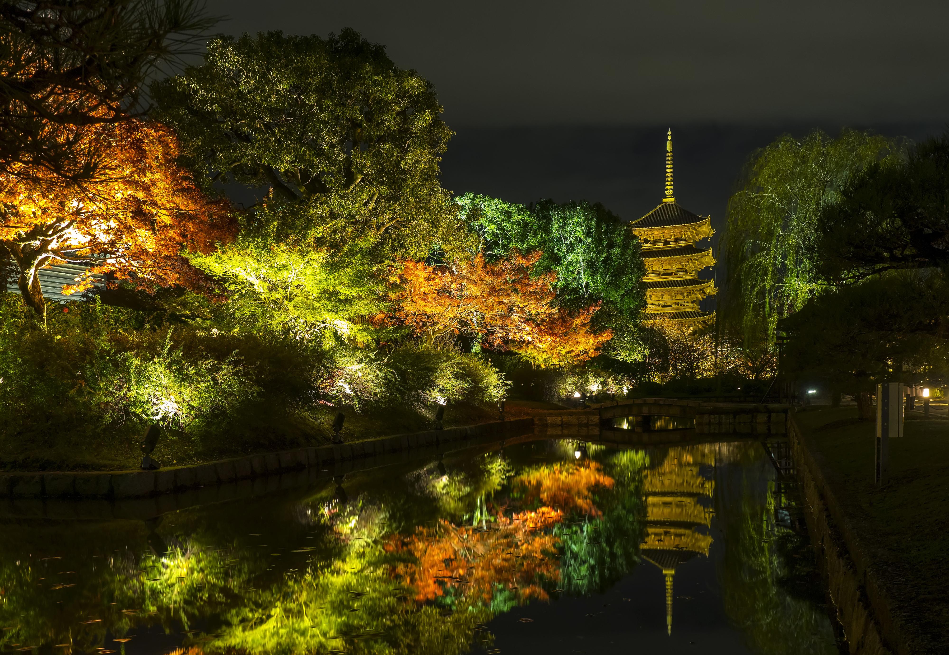 、日本、京都市、秋、公園、池、木、夜、街灯、自然