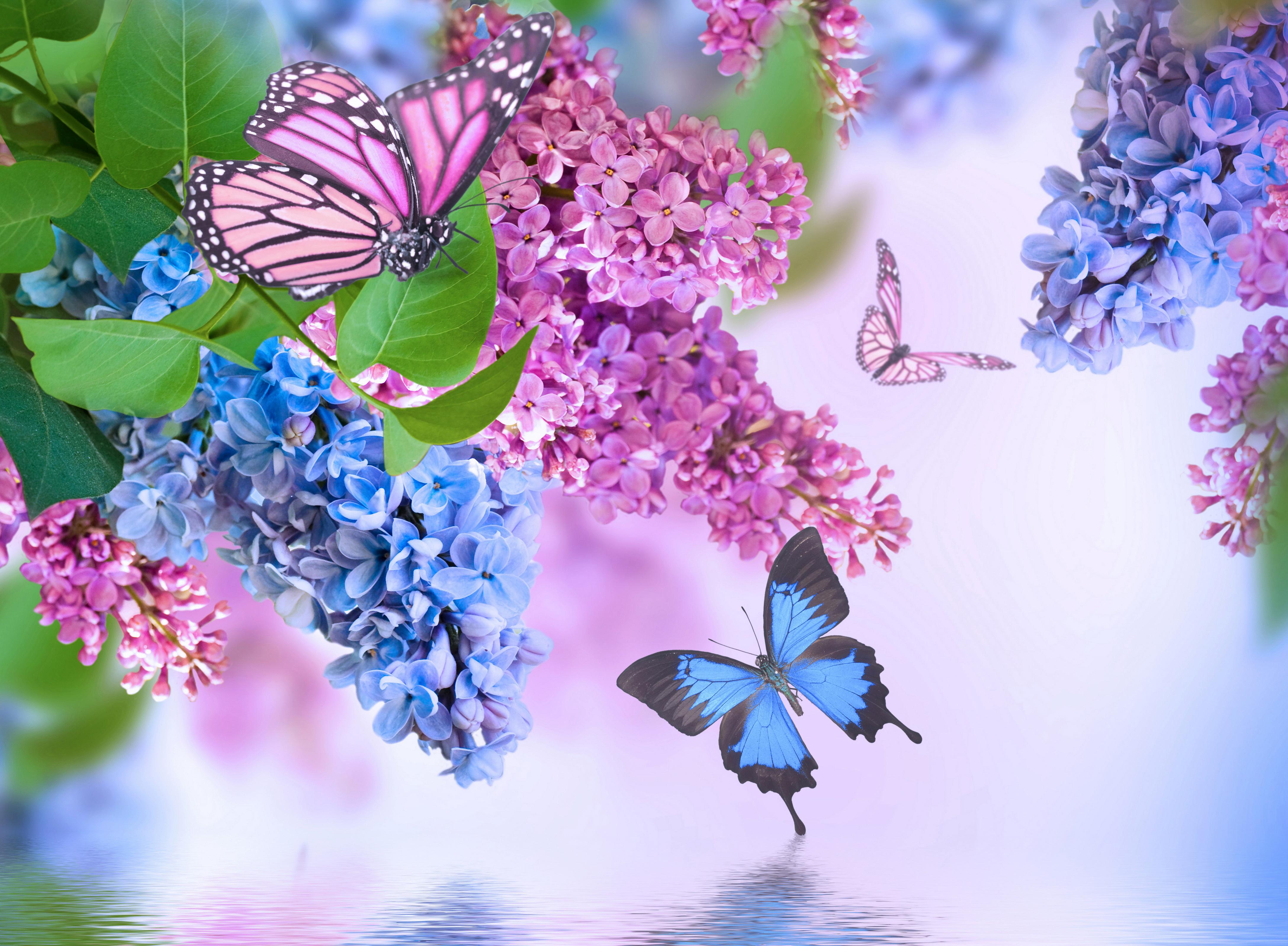 Bilder Schmetterlinge Blumen Flieder 4350x3196