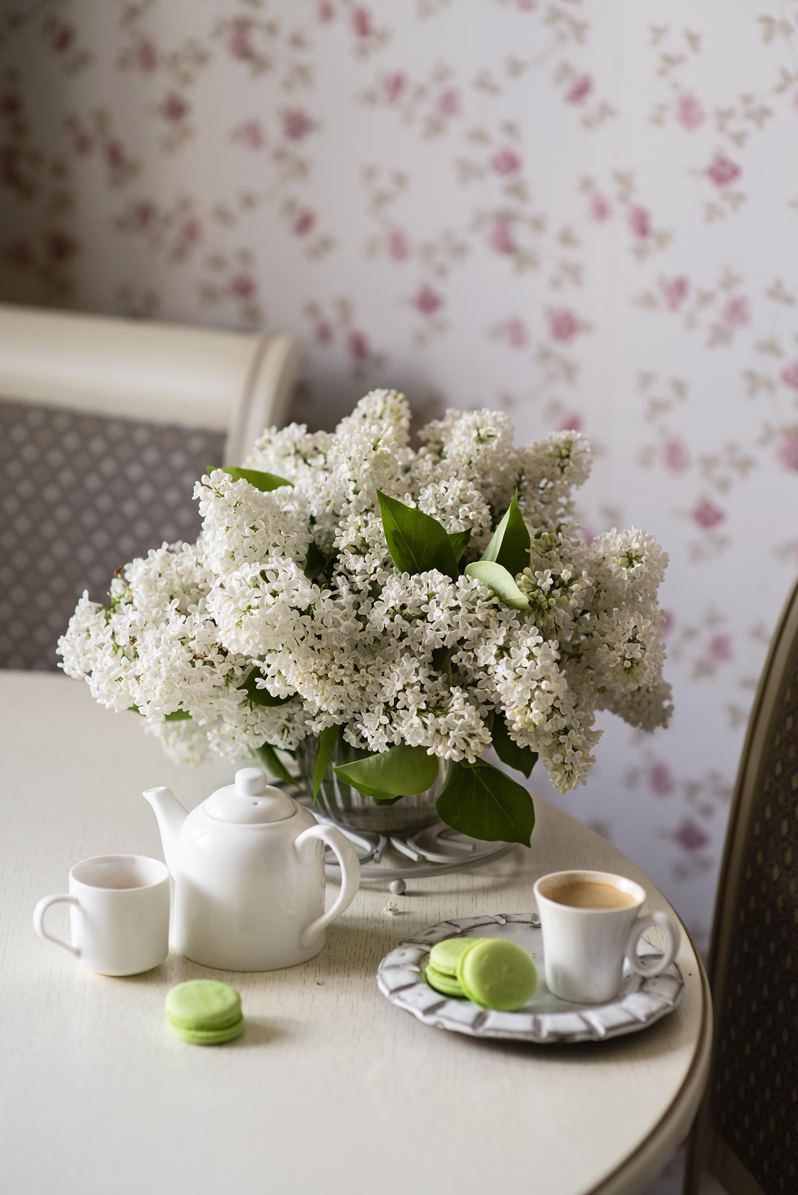 Bilder på skrivbordet makroner Vit Kaffe blomma bondsyren Mat Tekopp Stilleben  till Mobilen Makron bakverk syringa Blommor Syrensläktet
