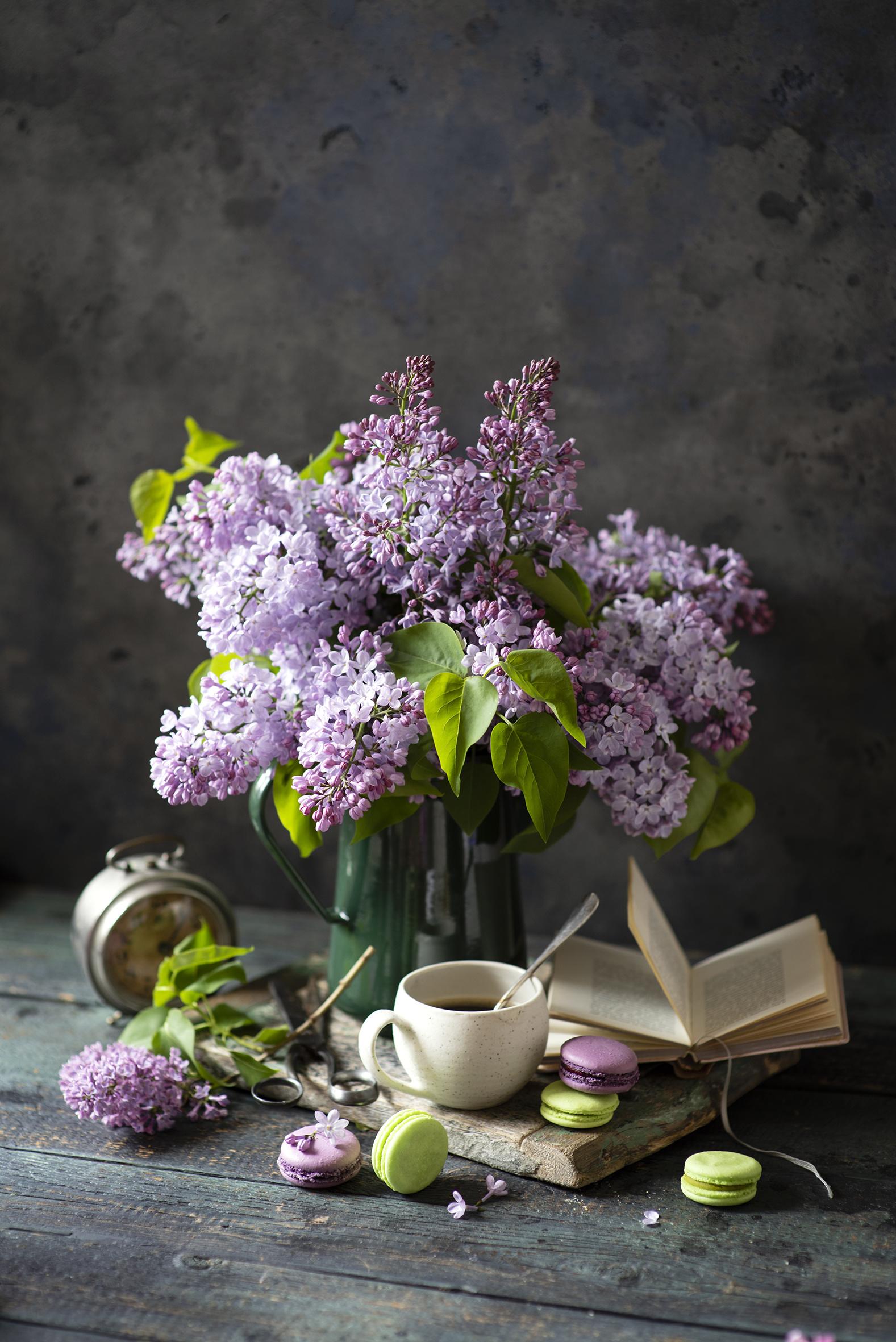 Bilder Macaron Blüte Flieder Tasse Bücher Stillleben  für Handy macarons Blumen Syringa Buch