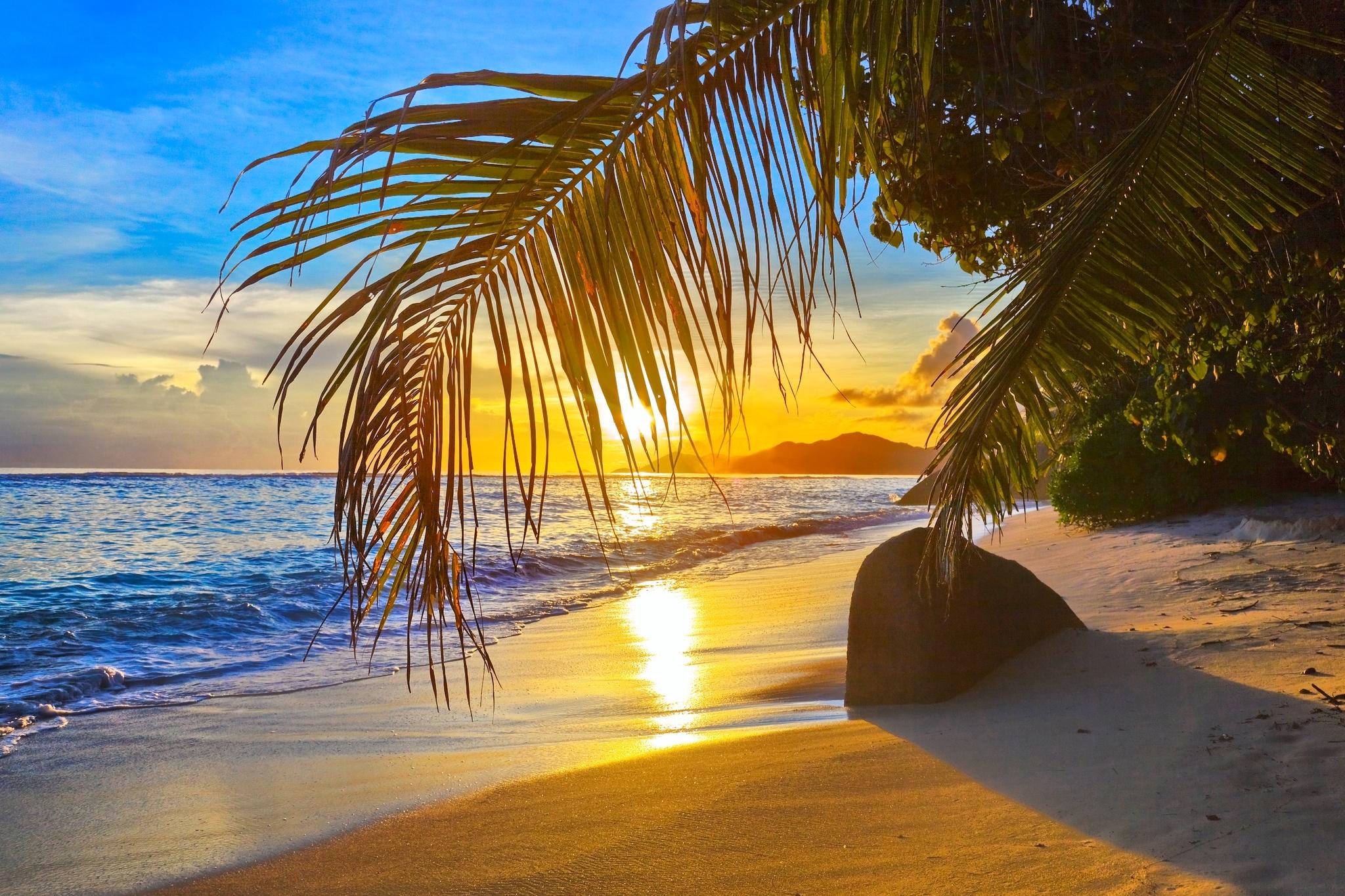 fotos von strand meer natur palmen